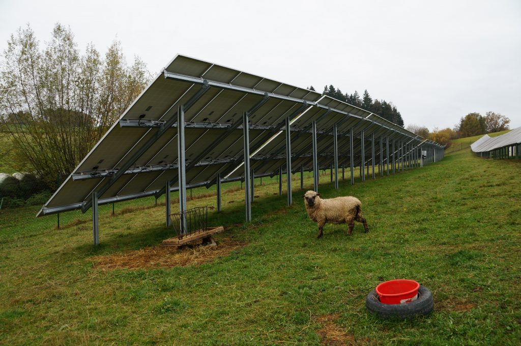 Agrar-PV-Anlage mit Schafen © Bundesverband Photovoltaic Austria