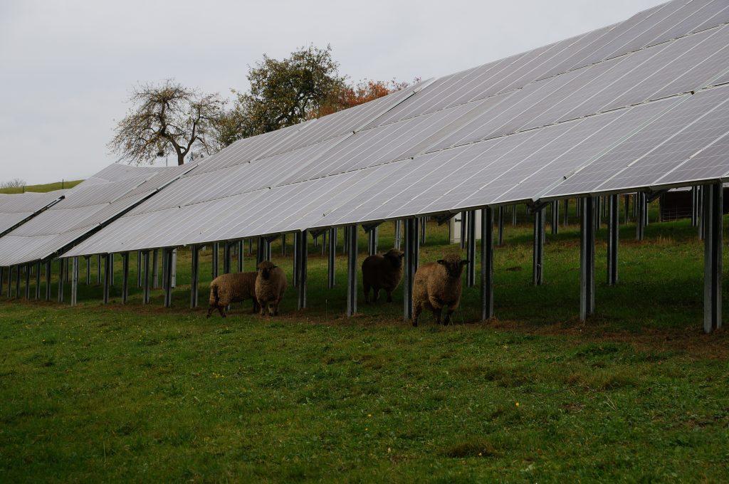 Agrar-PV © Bundesverband Photovoltaic Austria